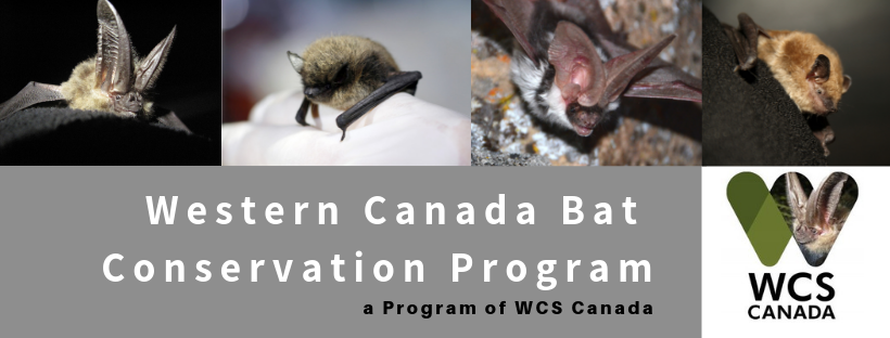 Western Canada Bat Conservation Program